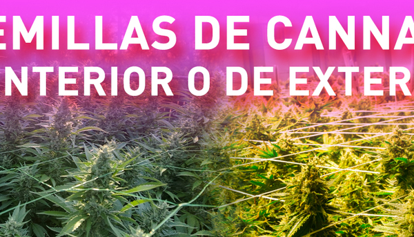 semillas cannabis
