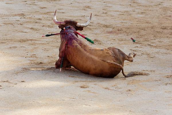 Toro en la arena