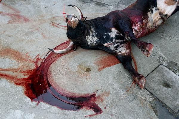 Rastro de sangre toro plaza de toros